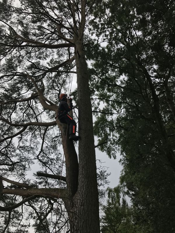 Tree Surgery Services Edinburgh