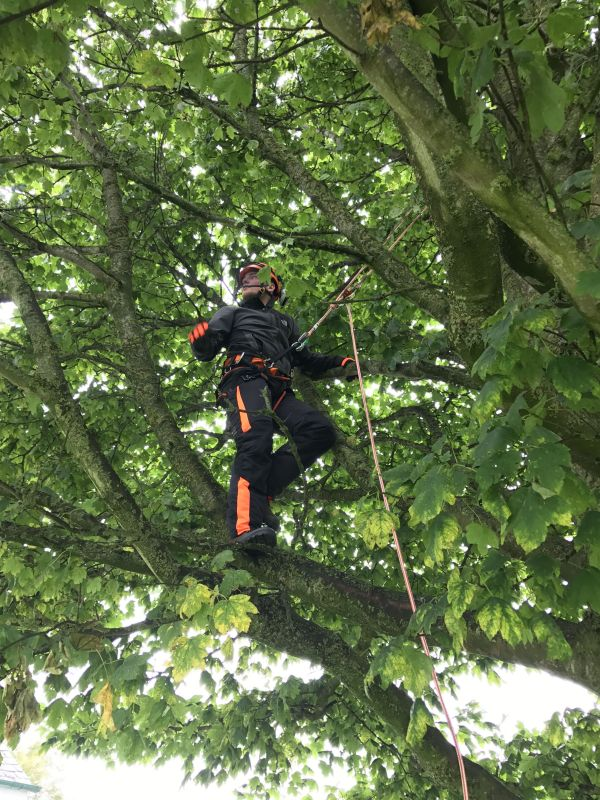 Domestic Tree Services Edinburgh
